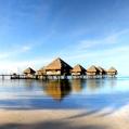 Líbánky na Tahiti v Le Meridien